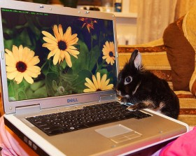 Pet With a Laptop Photo Contest – The Winner